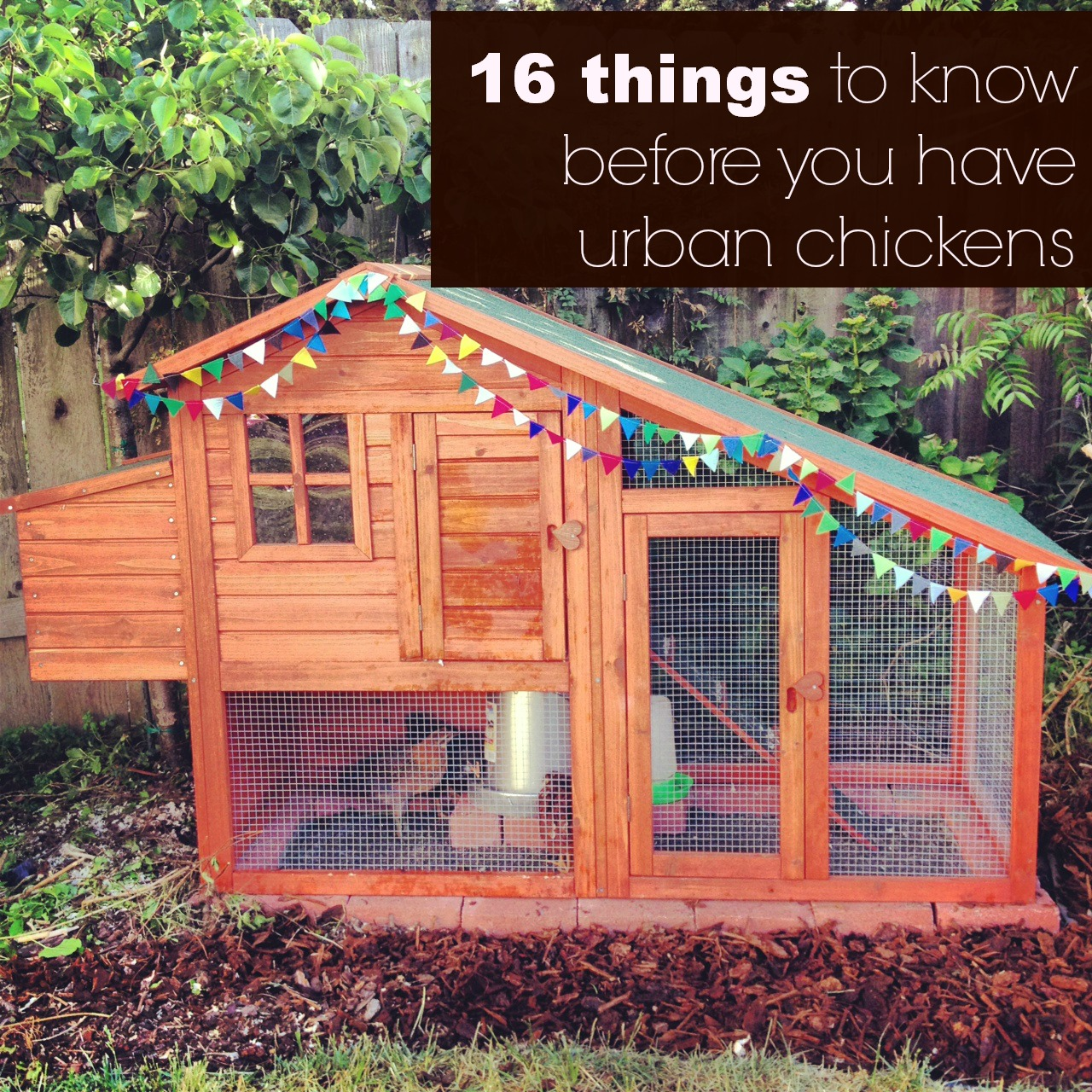 While I am well aware that there are plenty of super thorough websites all  about raising chickens, the problem with the Internet is that I often want  ... - 16 Things To Know Before You Have Urban Chickens Life Rearranged